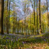 Het-bos-in-bloei