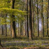 Lente-in-het-Bos