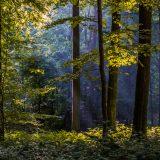 Ochtend-licht-