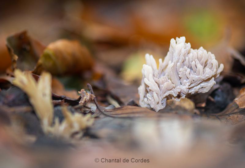 Macrofotografie paddenstoel
