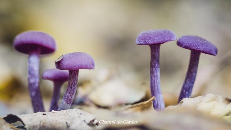 Macrofotografie paddenstoelen